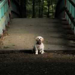 Hondje in het bos