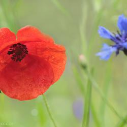 Ons eigen bloemenveldje