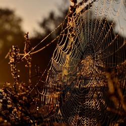 kunstig werk geleverd door de spin