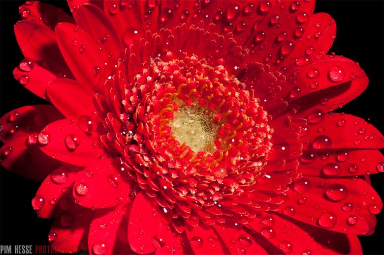 Red - Een experiment met stacking, hier zijn acht foto's samengevoegd tot één, zodat heel de bloem scherp is.