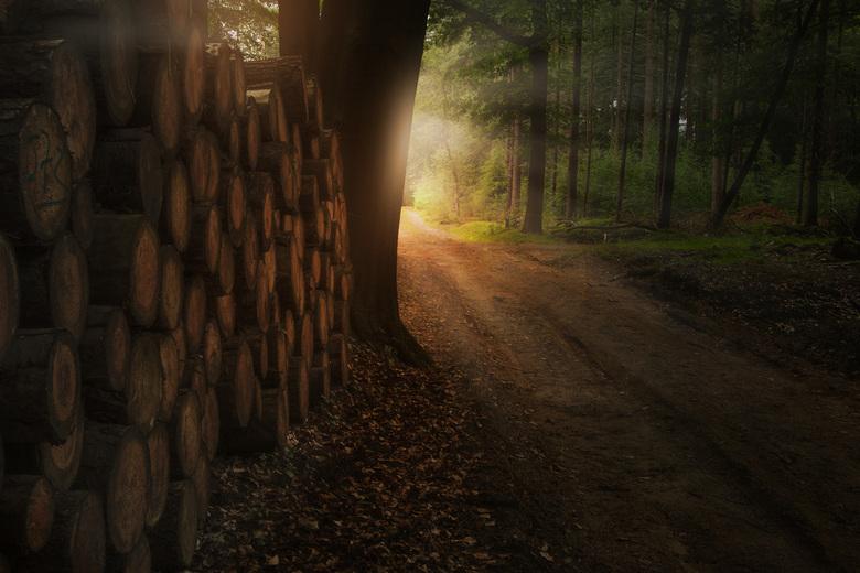 Magical forest - HDR opname van een magisch momentje