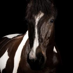 Eindelijk eens blackfoto's van mijn eigen paard