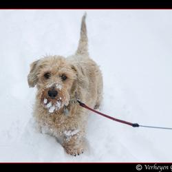 Schumi in the snow