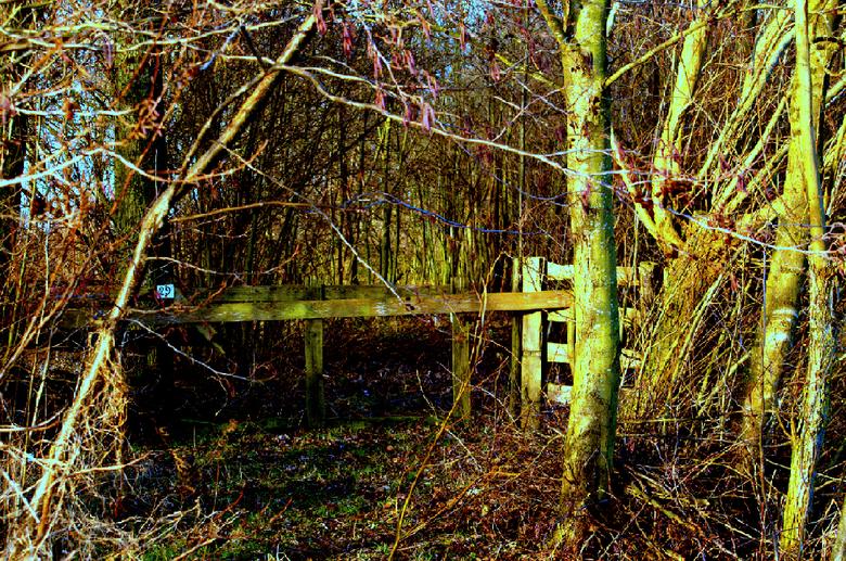 Onbekende kleuren - Er is vaak meer kleur in een ogenschijnlijk kleurloos en bladloos bos dan je denkt.