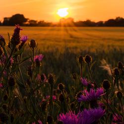 Zonsondergang in het Limburgse Heuvelland