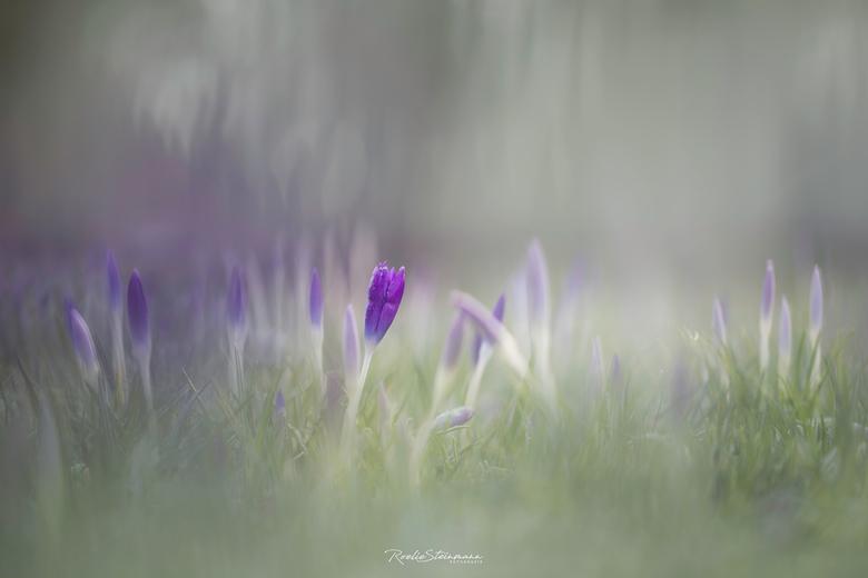 Springlight