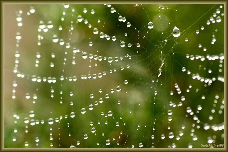 Spinnenweb met druppels 2 - Nog een opname van gister. Vooral ook even in de vergroting bekijken.