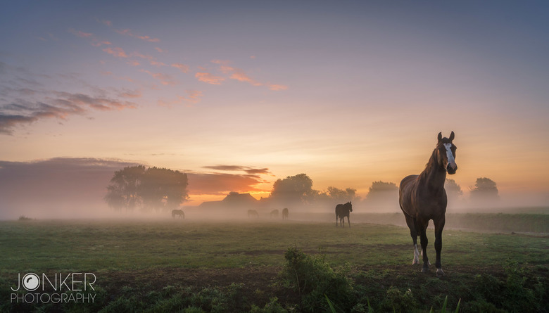 'Horses in the mist'