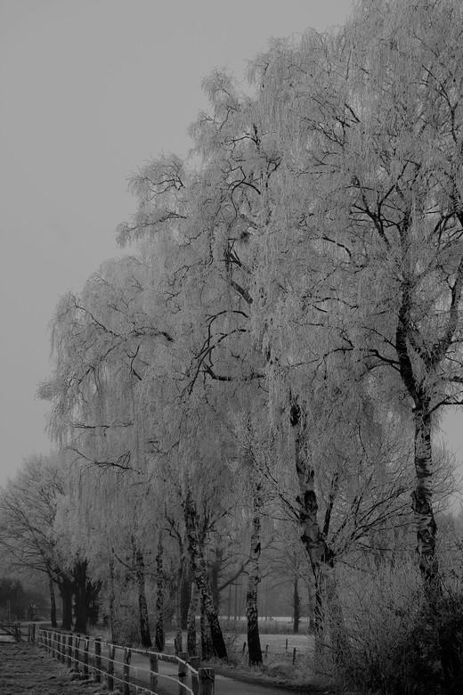 DSCF9941zwartwit sneeuw op berken - Toch nog een winterfoto er bij!