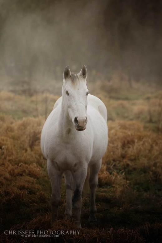 in de mist -