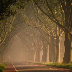 Dijk in de mist