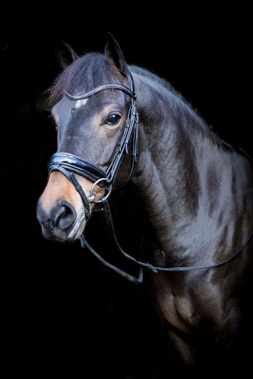 pony - deze foto gemaakt met mijn canon 7d mark 2 en de canon 50mm 1.4 lens