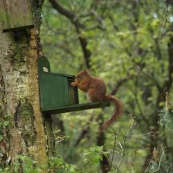 Eekhoorntje aan't ontbijt