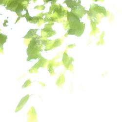 Wind through the walnut tree
