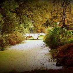 Herfst (bewerkt met warm filter)