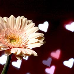 bloemhartjes