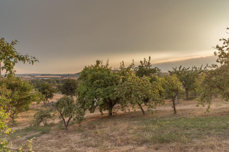 Zonsondergang Worbis, Duitsland - Gemaakt tijdens de vakantie, in het Duitse Worbis tussen de appelbomen door.