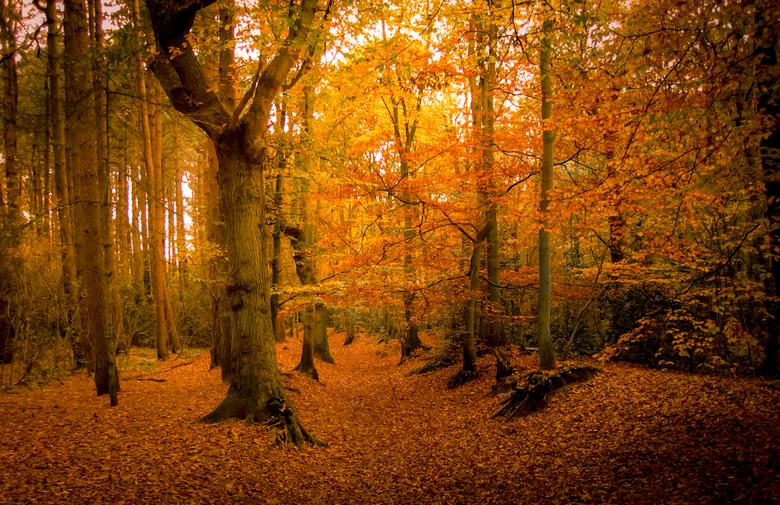 Herfst in het Heiloer bos -