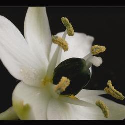 klein bloemetje 2