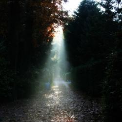 Spotlight in autumn