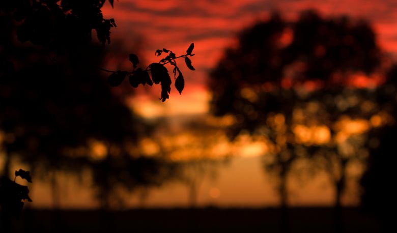 bladje - mooie zonsondergang