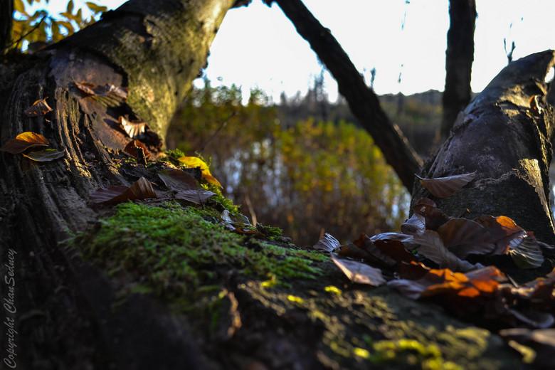 Herfst in het bos -