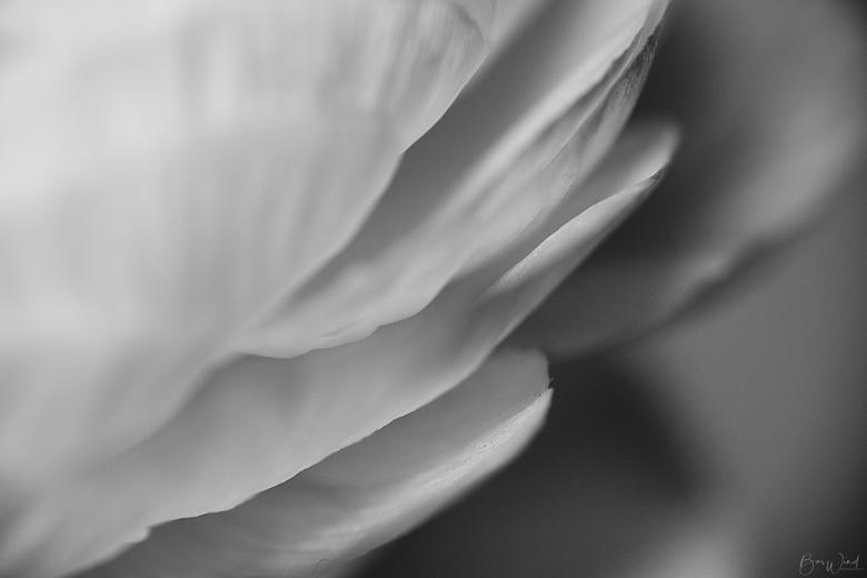 Petals essence - foto 3