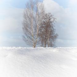 Sneeuw in de Holterberg 1