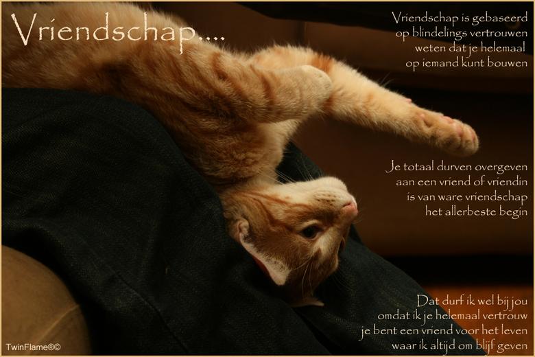 Vriendschaps e-card - Hallo allemaal!<br /> <br /> Hier een fotogedichtje c.q. kaartje over vriendschap... de foto is van onze kleine kater Trulli.<