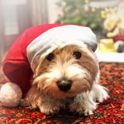 prettige Kerstdagen aan alle zoomers