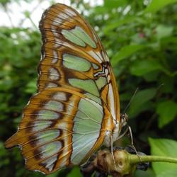 Alweer een vlinder op de kiek...