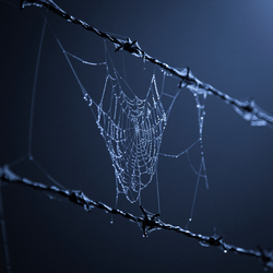 Between the barbed wire