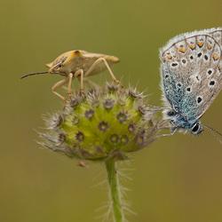 Vlinder en wants