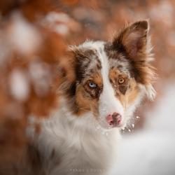 Hé, er zit sneeuw in je snor..