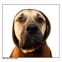 Gangster Dog!