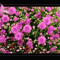 Oktober: Pink Ribbon maand