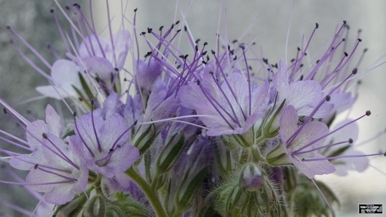 In de tuin - Wilde bloemen in de tuin. Geen idee hoe ze mogen heten, het zijn wel beauty's!
