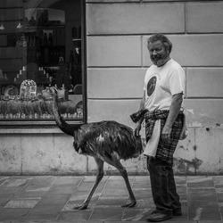 Man with ostrich Ljubljana