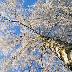 ** Onder de winterboom **