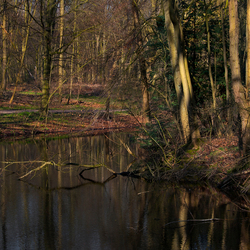 't Haagse Bos (2)