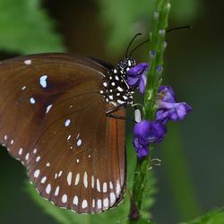 weer een vlinder,  zucht
