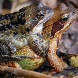 frog love ;-)