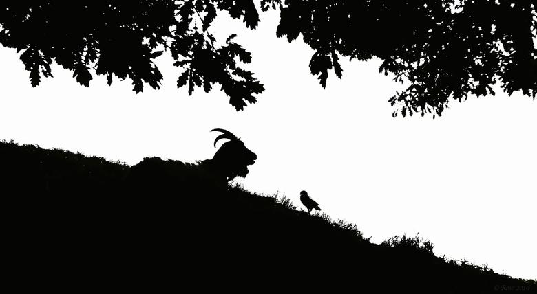 Onder-onsje - .... Zei de geit tegen de vogel....