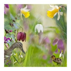 Voorjaar in de heemtuin 2