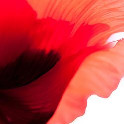 redflow