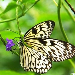 flora en fauna samen
