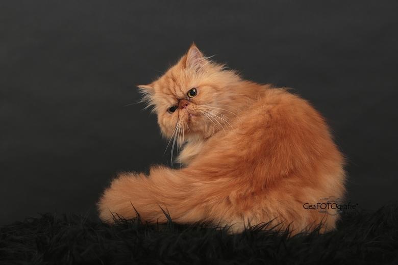 Garfield*