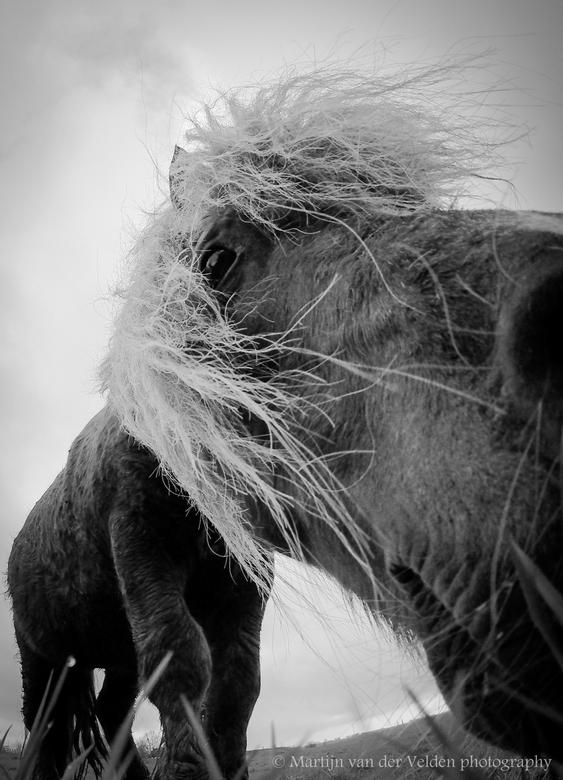 Pony - Nieuwsgierige Pony langs het Spui in Oud-Beijerland