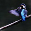 Vleugels wassen