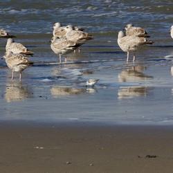 Texels strand